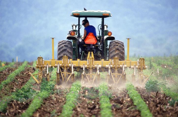A man on a tractor with large wheels looks backwards at a row of green plants. The tractor pulls four plows that throw dust in the air and create wide divots in the soil. In the background is a green backdrop of a tree-speckled hill.
